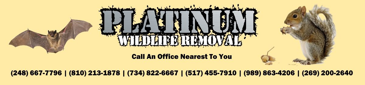 Michigan Rat Removal Professionals